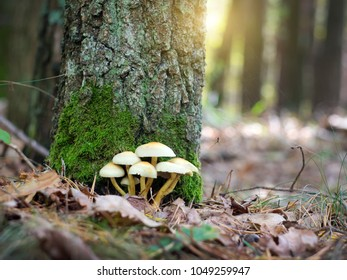 mushrooms in autumn forest on a glade
