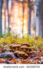 Mushrooms in an autumn forest in a sunny day.