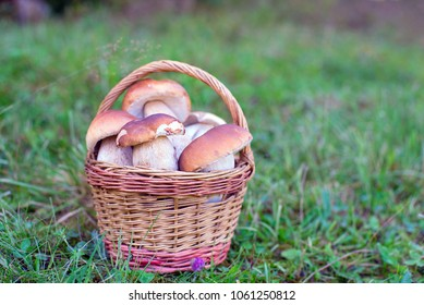 a mushrooms in basket on the meadow