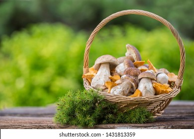 Mushrooms in the basket. Raw Wild Mushrooms boletus. Composition with wild mushrooms