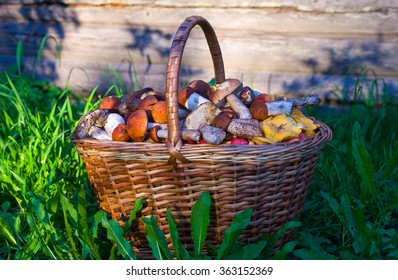 Mushrooms in the basket/Leaning basket with mushrooms