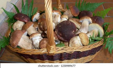 Mushrooms (Boletus edulis - Boletus pinophilus - Boletus reticulatus)