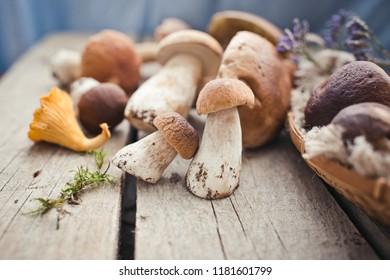 Mushrooms close up/selective focus