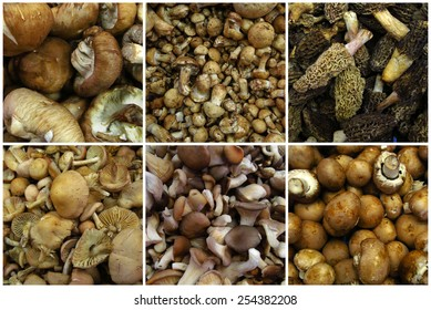 Mushrooms collage from market, food ingredients