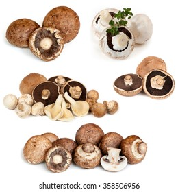 Mushrooms collection, isolated on white.  Button, Swiss, Portobello, oyster, field, brown varieties.