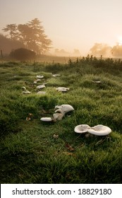 Mushrooms eaten by creatures before sunrise