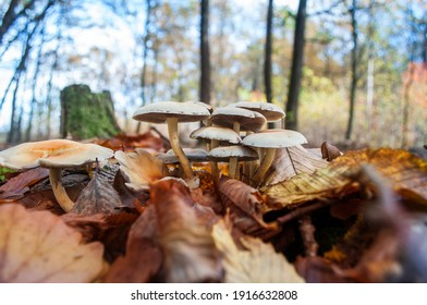 Mushrooms in the forest. Close up.