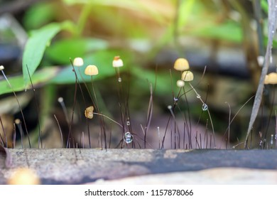 Mushrooms in forest,Mushrooms are born in the wild nature.