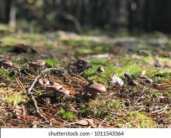 Mushrooms in green moss
