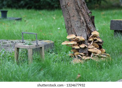 mushrooms growing on tree and graves at municipal cemetery in Amsterdam, The Netherlands