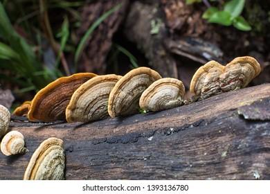 mushrooms growing on tree trunk in Colombia