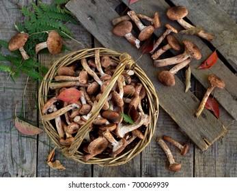mushrooms honey agarics in basket on grey wooden background. Top view