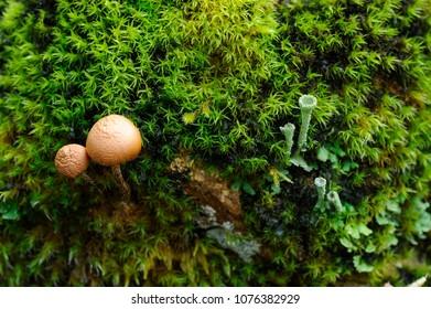 Mushrooms, moss and tubular fungi in rainy season forest closeup.