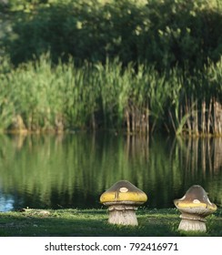 Mushrooms on a  grassy park with a lake in the background in dark green.