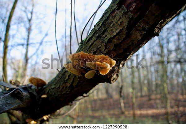 Mushrooms on a mossy log