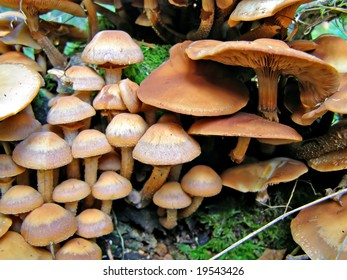 mushrooms on stump tree