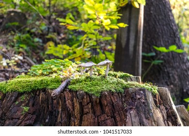mushrooms on tree bark covered with moss