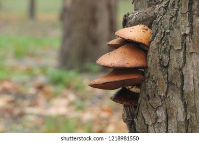 Mushrooms on a tree in a forest with fog