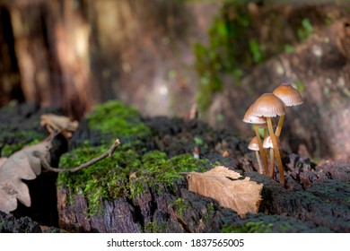 Mushrooms on a treestump covered with moss and leaves