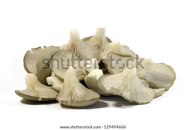 Mushrooms on white background