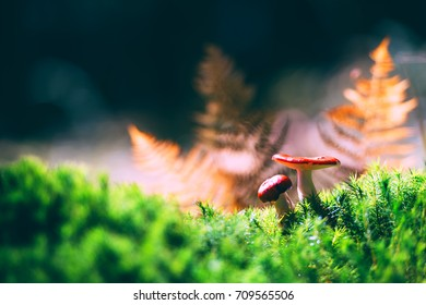 Mushrooms with red cup in autumn forest. Green moss and orange fern on a foreground