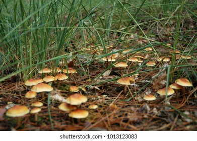 Mushrooms in the South of the Netherlands