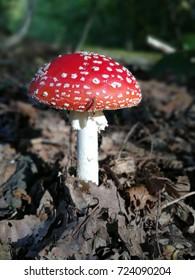Mushrooms toadstools in nature