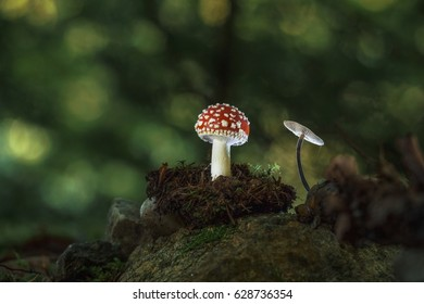 mushrooms in wonderland - mushrooms in a small world - lost souls