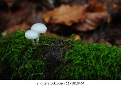 mushrooms in the woods