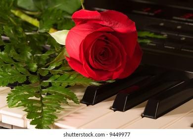 musical rose