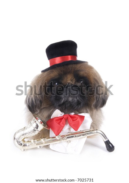 Musician brown Pekingese dog dressed in red bow tie and black top hat with saxophone isolated on white