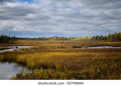 Muskoka Marshland Marsh Bog Trees Stream And Forest In The Fall