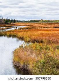 Muskoka Marshland Marsh Bog Trees Stream And Forest In The Fall Part II