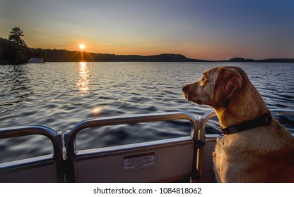 Muskoka, Ontario/Canada - September 5, 2017: Cottage country in Muskoka and dog enjoying boat time