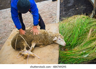 Muslim men holding young sheep ready to kill it as religion ritual for Kurban Bairam Holiday