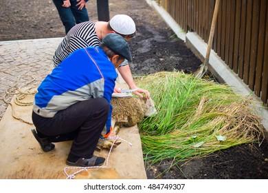 Muslim men holding young sheep ready to kill it as religion ritual for Kurban Bairam Holiday