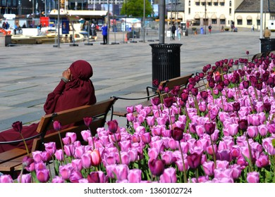 A muslim woman in jilbab sitting on a bench at the Oslo harbor. Colorful tulips flowering behind her.