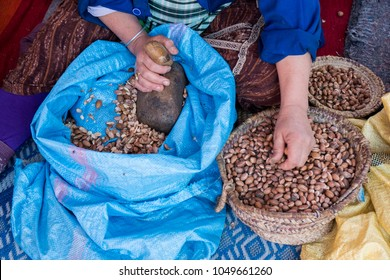 Muslim women making argan oil in traditional way in Morocco. Traditional production of argan oil used for cosmetics and in food preparation