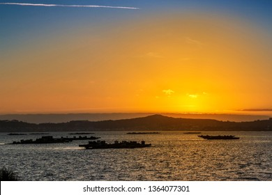 Mussel aquaculture rafts in Arousa bay at golden dusk