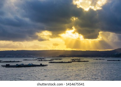 Mussel aquaculture rafts in Arousa estuary under the stormy sun rays of the sunset