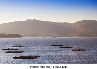 Mussel aquaculture rafts in Arousa Estuary with Curota Mount at background