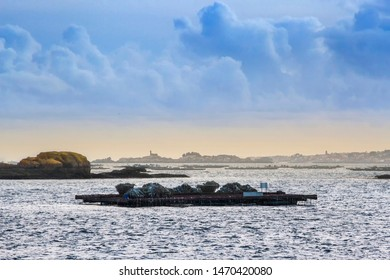 Mussel aquaculture rafts in Arousa estuary with Rua Island in the mist at background