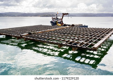 mussel farm aquaculture rafts in Galicia , Spain