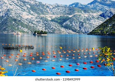 Mussel farms in Stoliv, Kotor Bay, Montenegro
