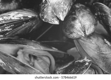 Mussels Detail   in Black and White