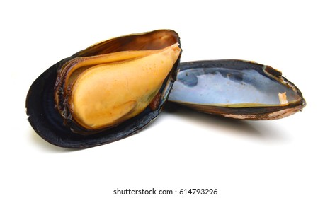 Mussels isolated on white background
