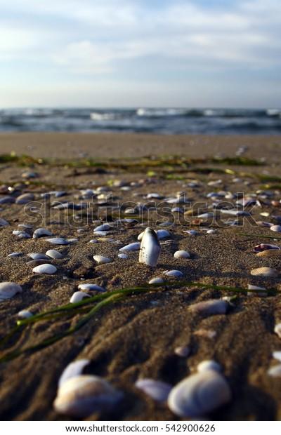 mussels on a beach and sea in Mudanya, Bursa