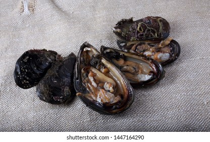 Mussels and opened mussels on bagging