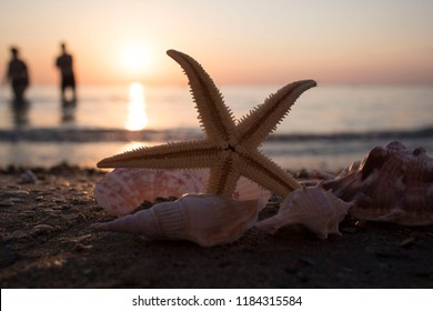 Mussels, sea urchins, starfish, seashells on a stone in the sea landscape. Blue sky and ocean waves with rocks at sunset