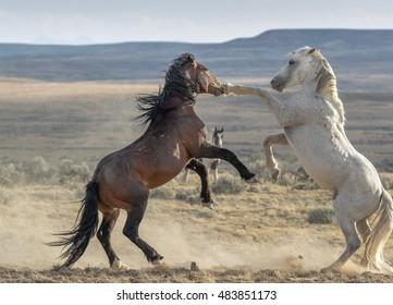 Mustang Battle